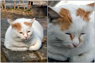 ふくぷく猫.jpg