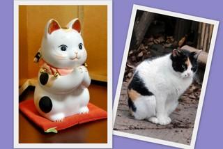 おねがい猫と玉ちゃん.jpg